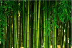 Bright green bamboo shoots and leaves
