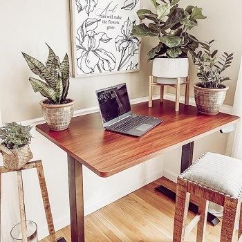 FlexiSpot Seiffen model height adjustable standing desk